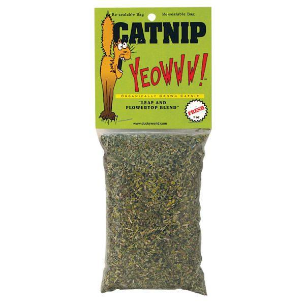 Organically Grown Catnip